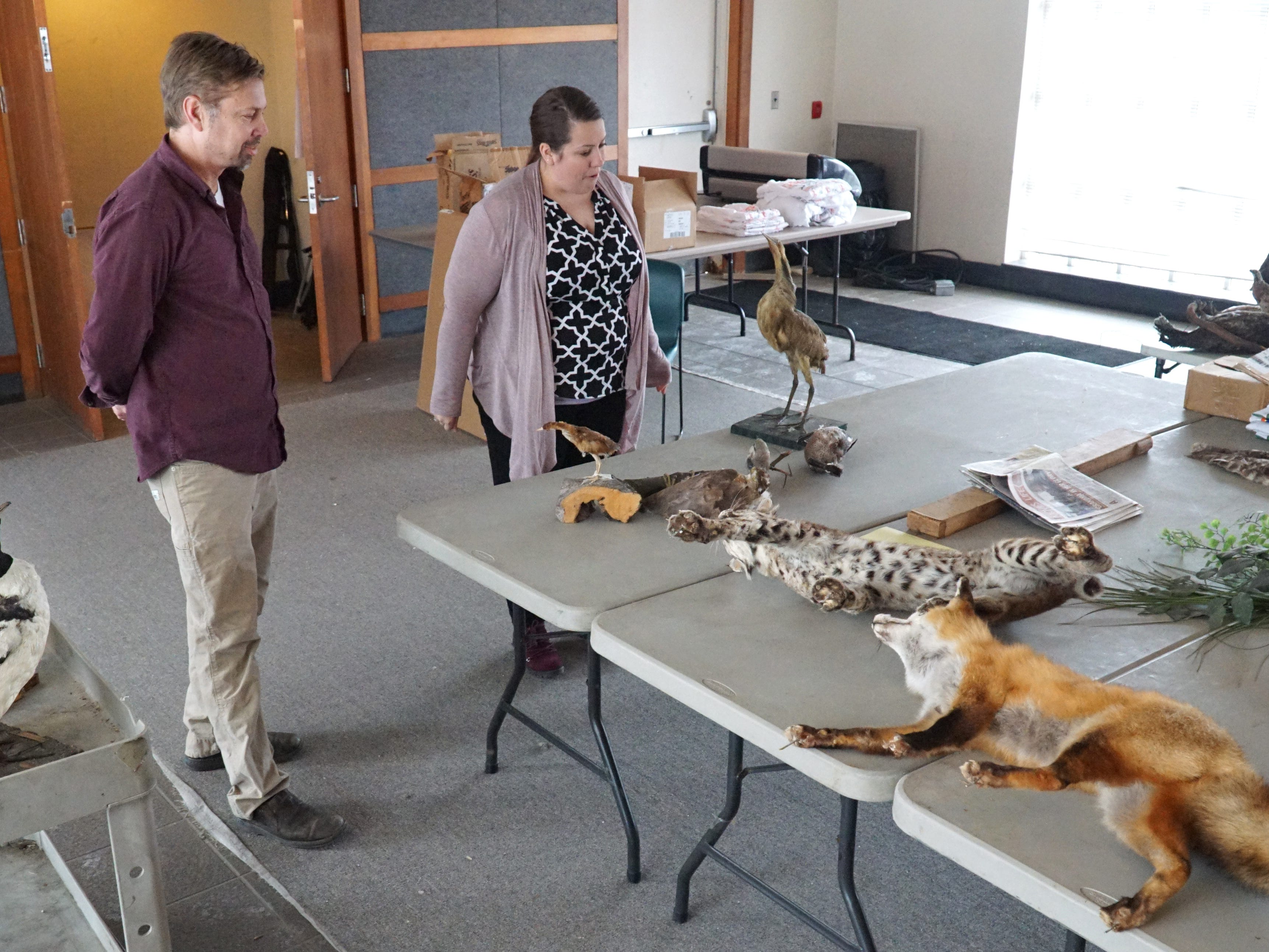 Naturalists Matt Noble-Richardson and Sarah Ptasznik begin to organize some of Nankin Mill's taxidermied animals as they prepare to put them in new displays inside the Livonia nature center.