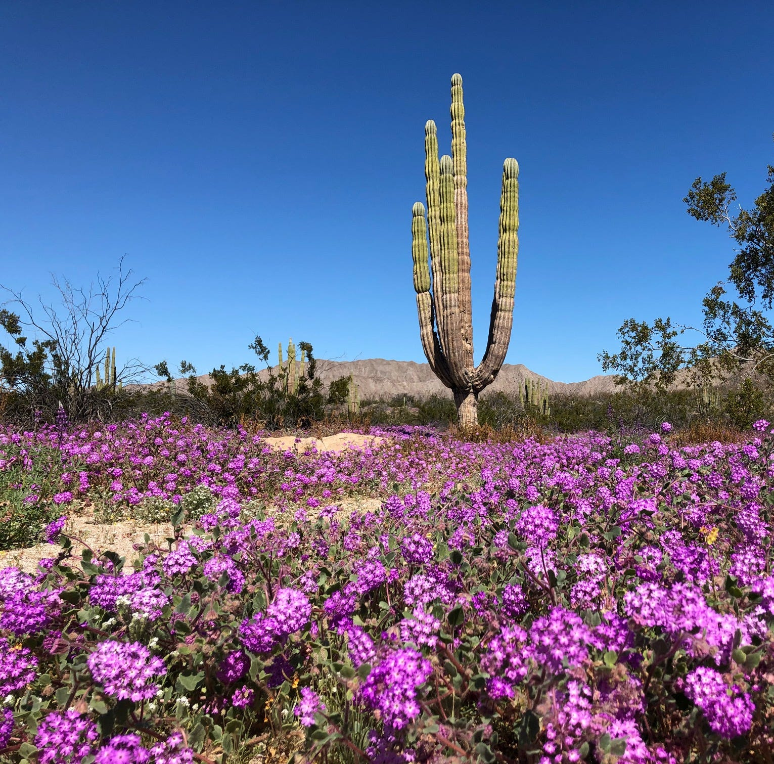 The super bloom has started in Mexico. Pack your bags for San Felipe