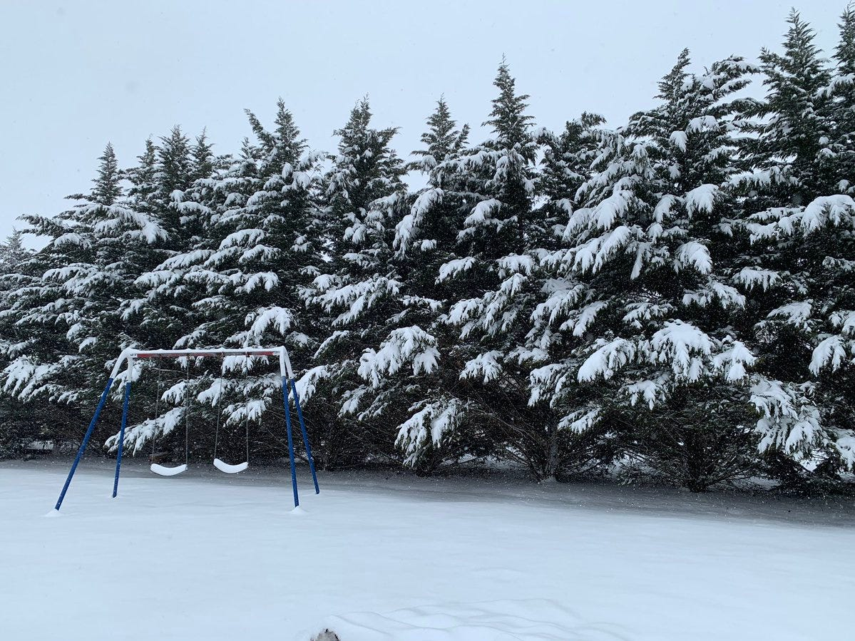 Here's a snowy scene from a McSherrystown backyard.