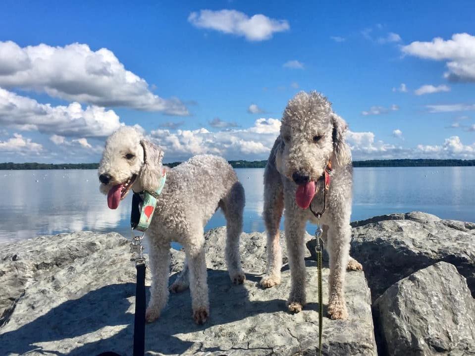 Lucy Bo Peep And Zeke The Sheep On Seneca Lake.