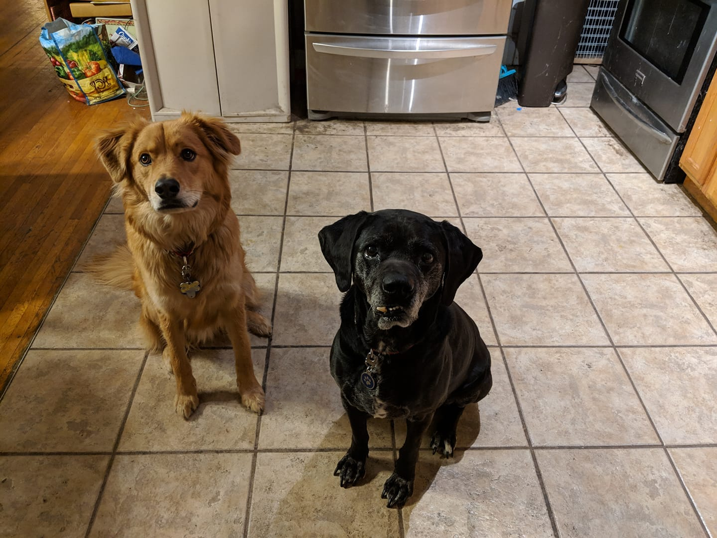 Bran, left, and Maggie