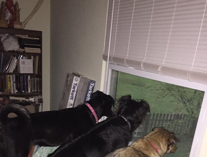 Murray, Olive and Yoshi