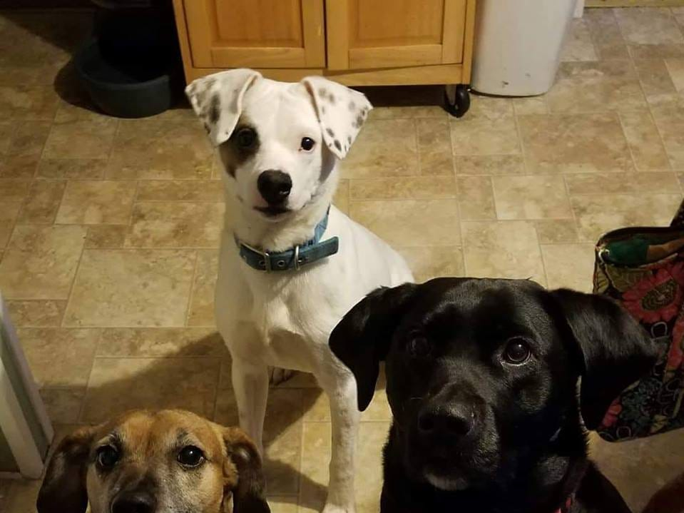 Diesel, Spot and Molly.