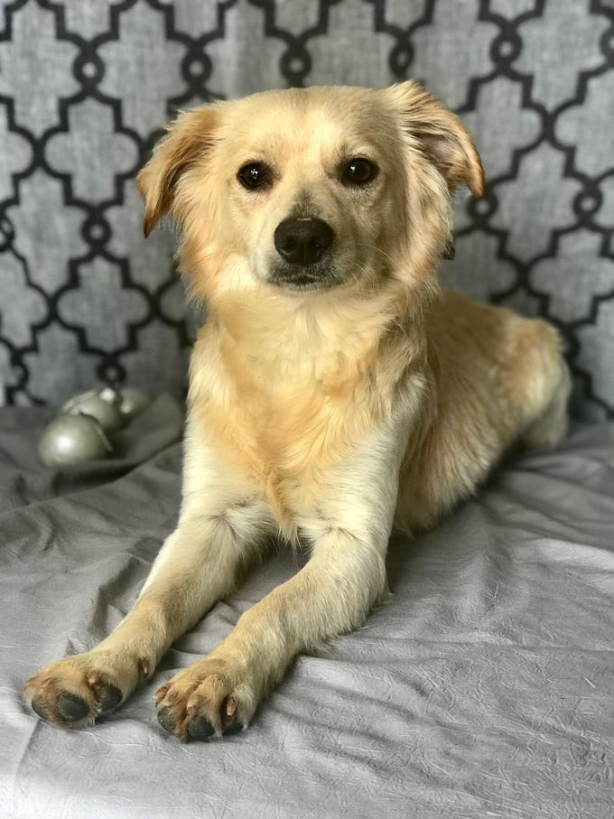Sully is a 1-year-old, 22-pound adorable mutt. He does pretty well with other dogs and cats, and is learning leash and house manners. He loves people and would do best with children ages 11 and older. Visit Tails of Rescue Adoption Center, 981 Lake Blvd., Redding. Call 448-7444. Go to http://tailsofrescue.org.