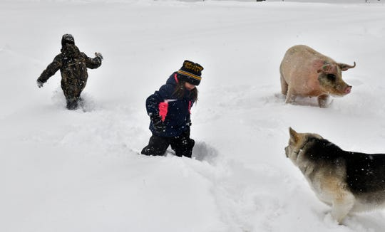 Everett and Vivian Rudolph play in the snow with one of their dogs and their pig Hans Wednesday, Feb. 20, on their farm near Little Falls.