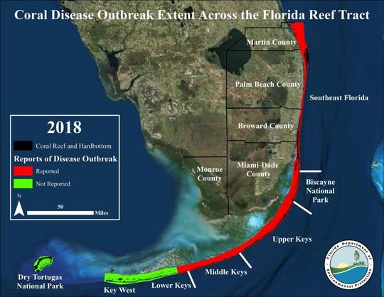 Coral Disease along the Florida Reef Tract