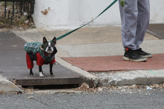 A dog is dressed for snow during a walk on Main Street in Newark Wednesday.