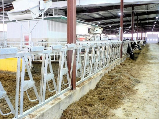 The barn will hold 240 milk cows in addition to maternity and calving pens.