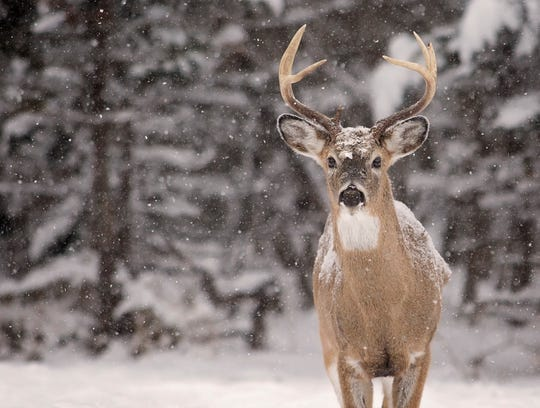 Chronic wasting disease is a prion disease that affects deer, elk, reindeer, sika deer and moose.