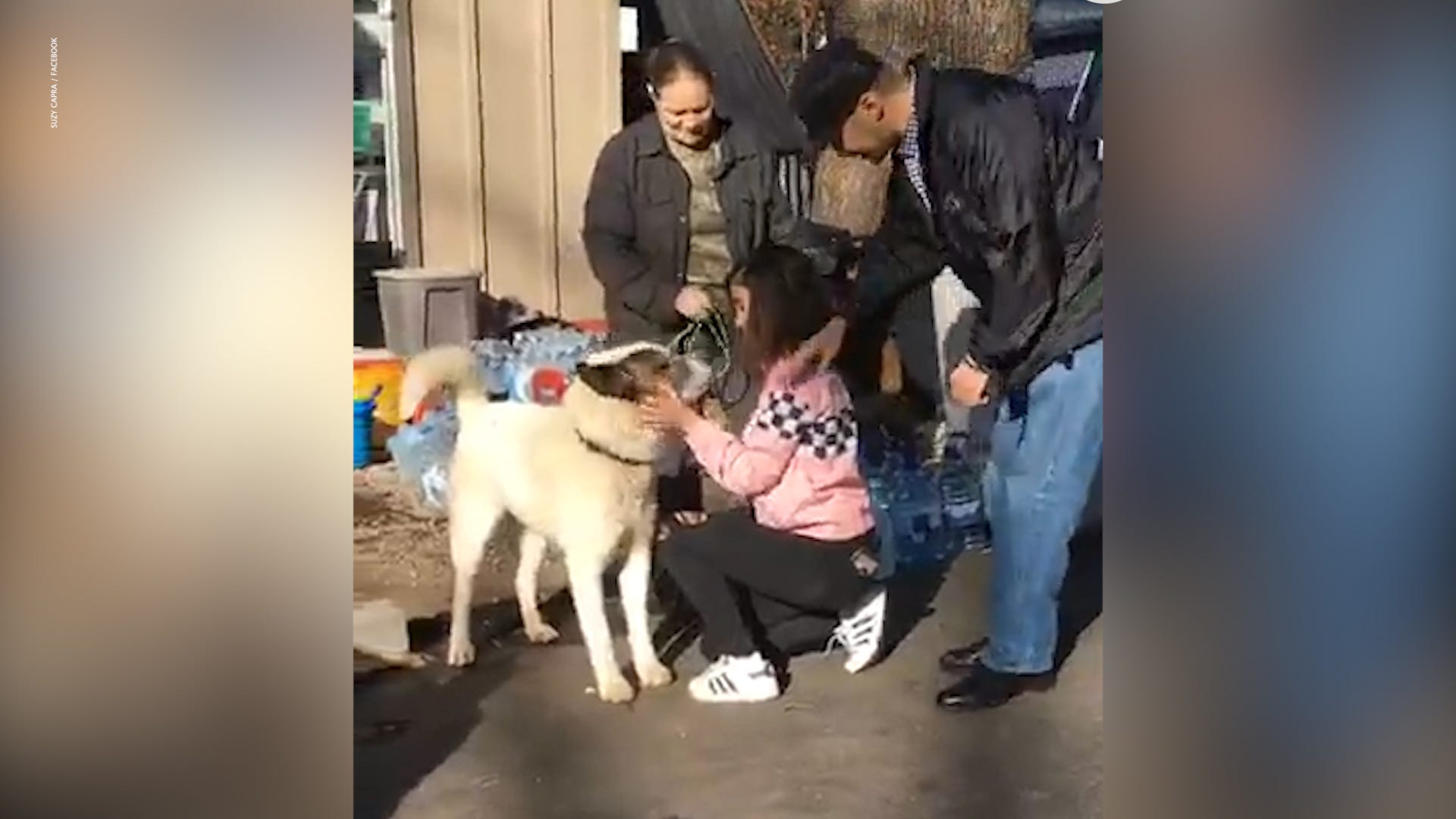 Dog returns home 101 days after fleeing California wildfire, possibly  survived on skunks