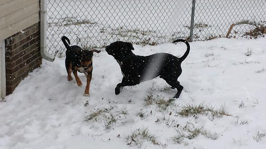 Tamariah Tower posted photos of her dog Roscoe after his death, including this one of him playing in the snow with another dog.