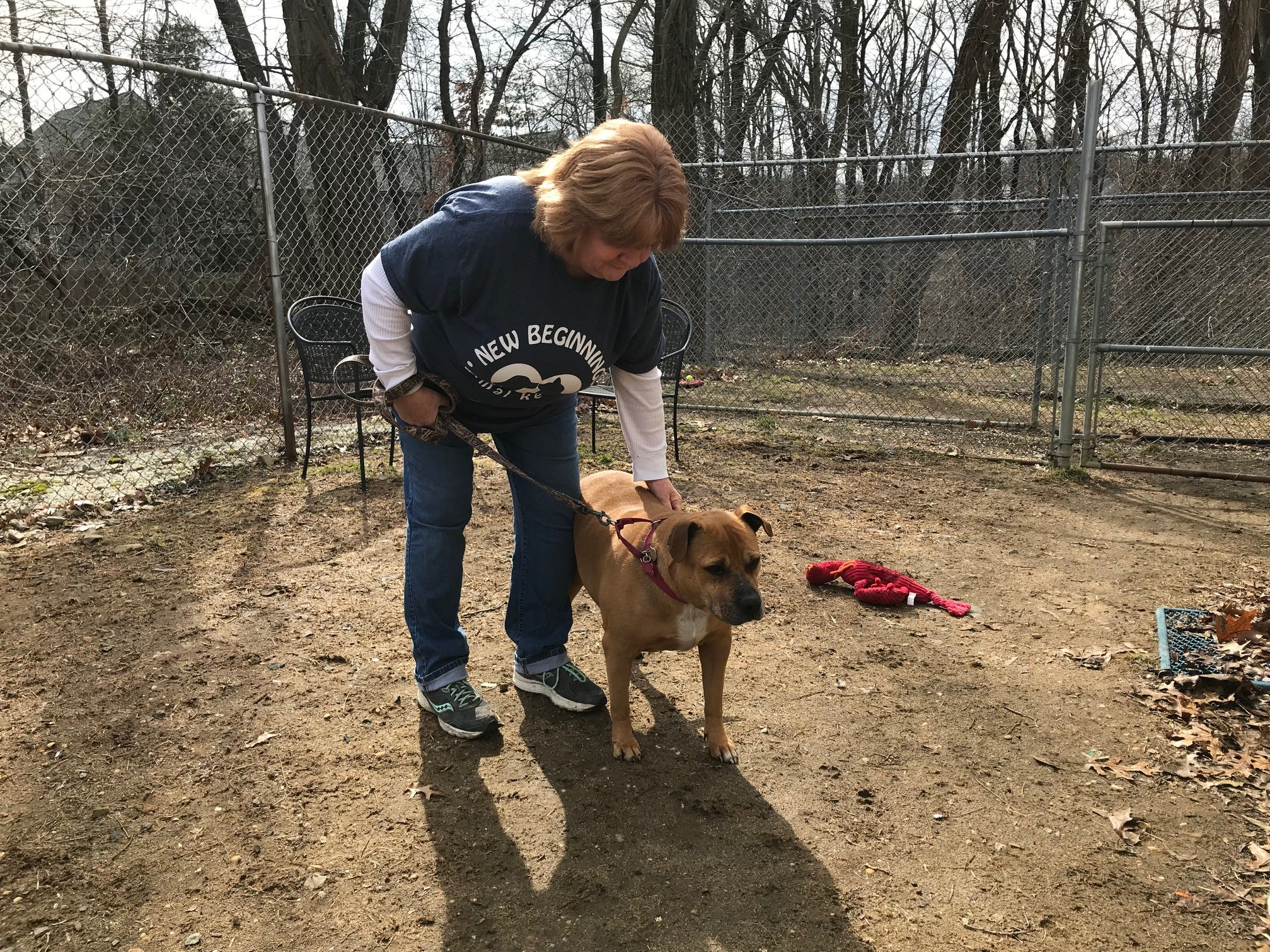 Princess, a boxer/pit mix, is 11 and loves to play. She can be adopted at New Beginnings Animal Rescue in East Brunswick.