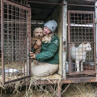 Five dogs saved from South Korea meat farm adopted in Midland Co.