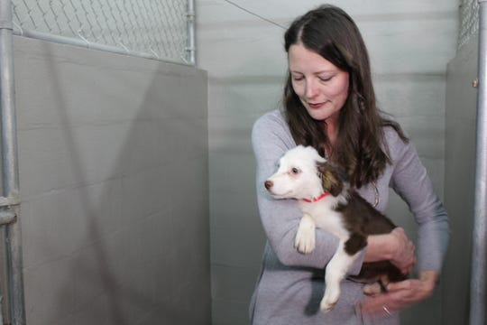 Wisconsin Human Society spokeswoman Angela Speed with one of 31 dogs that were removed from a home in the town of Eaton in Brown County on Feb. 20