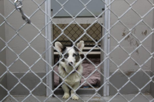 One of 31 dogs removed from a home in the town of Eaton in Brown County on Feb. 20