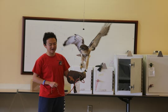 Pit Wang, a 22-year-old Cornell University senior majoring in interdisciplinary studies at the College of Agriculture and Life Sciences, shows a raptor.