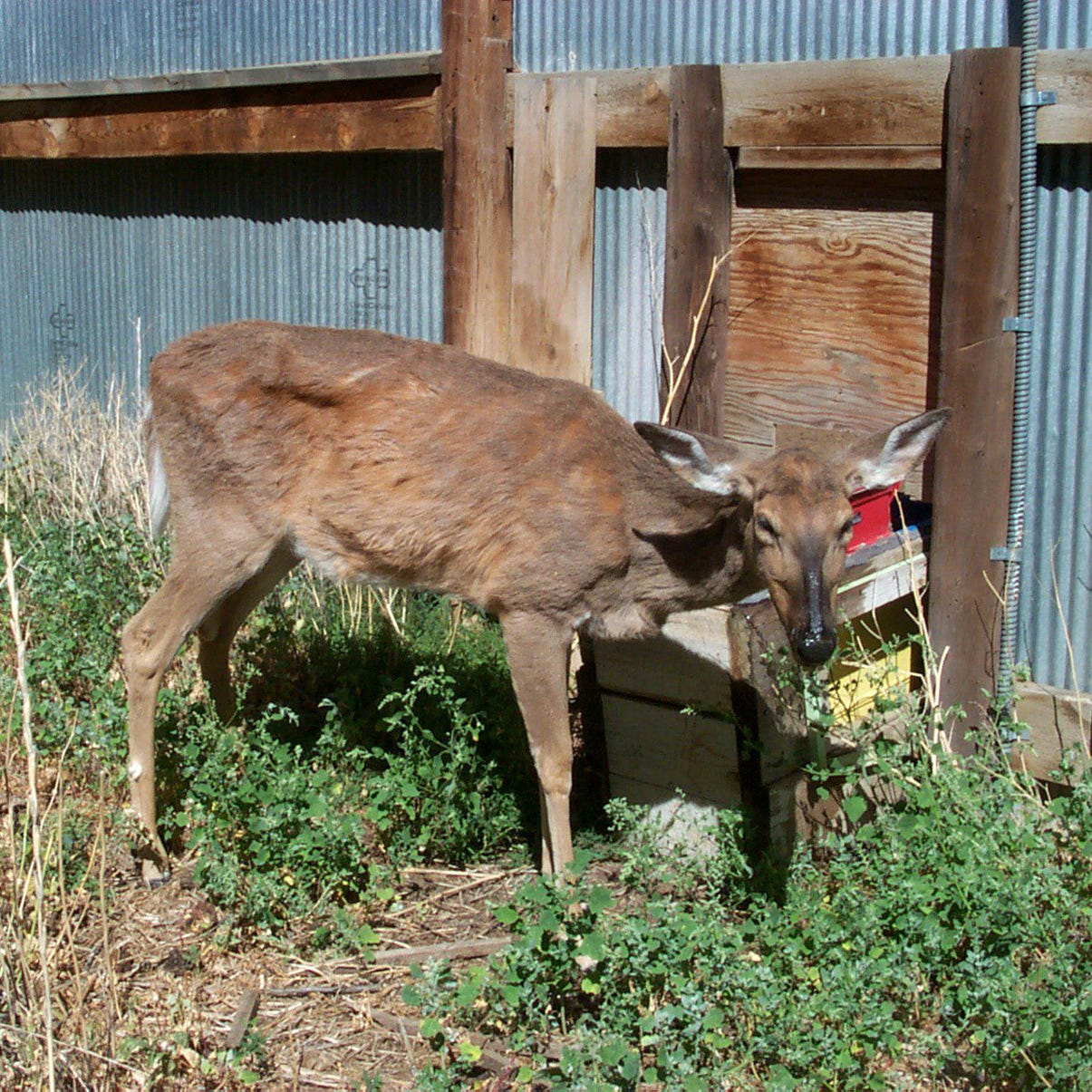 More cases of CWD found: Here's what we know.