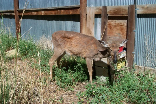 More cases of chronic wasting disease have been discovered in north Mississippi and officials are working on a proposal for expanding the management zone.