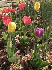 Tulips offer tons of color with remarkably low water requirements.