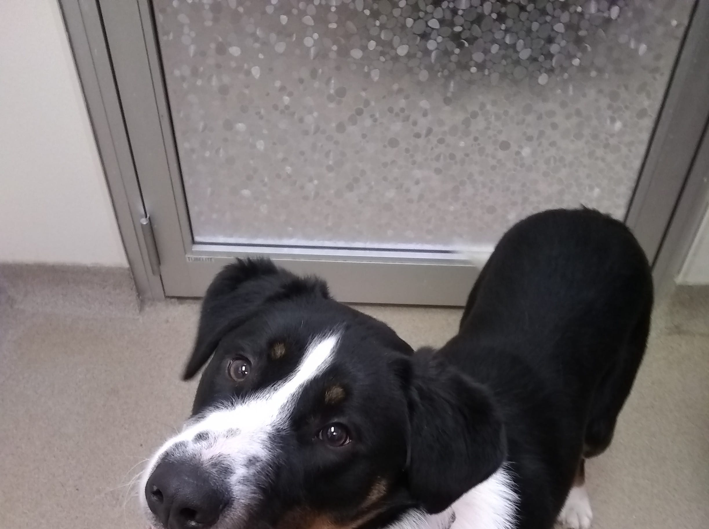 A 7-month-old mixed breed, Jake is full of puppy love and energy. He is neutered.