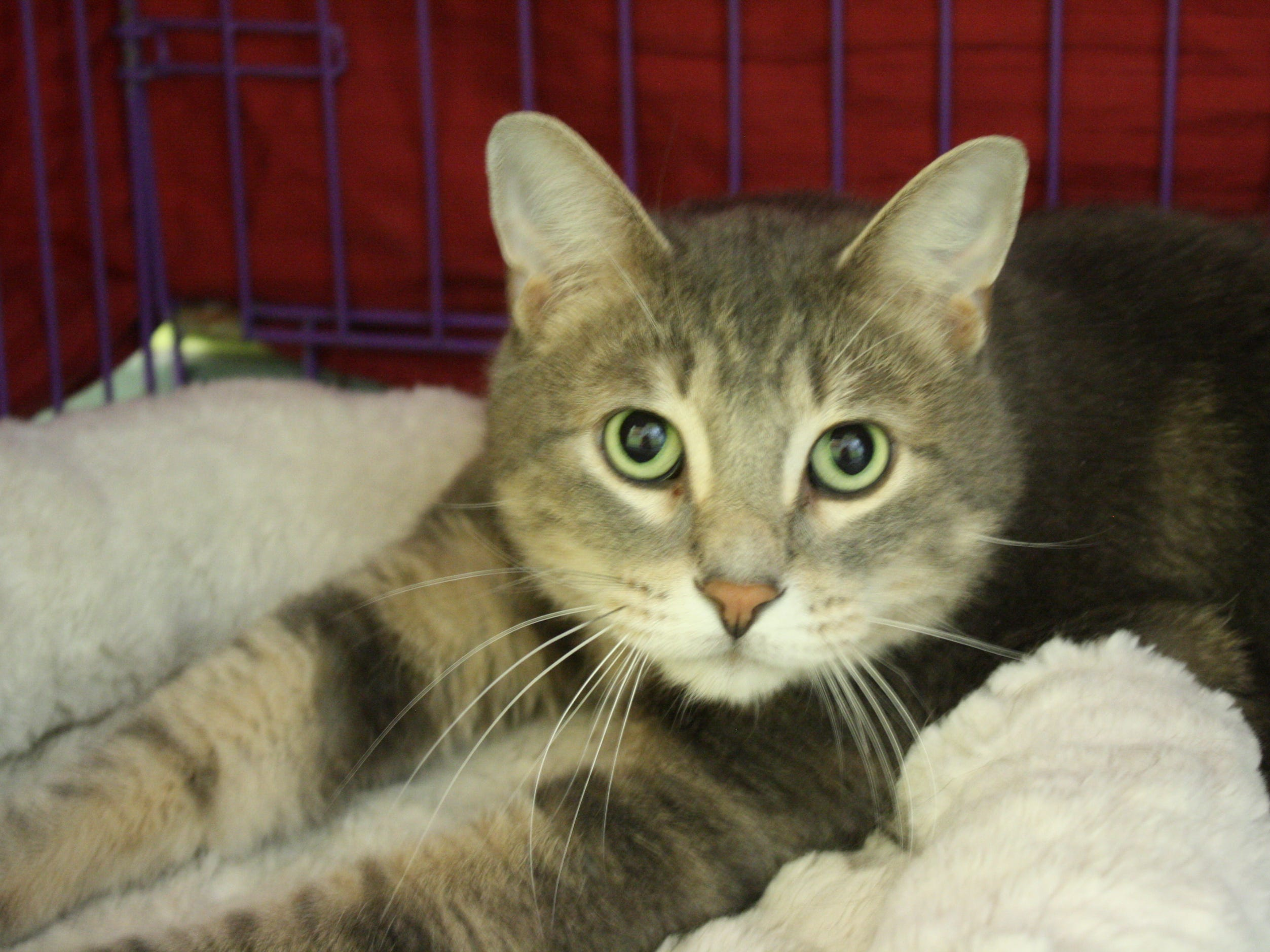 Oz, 4, is hoping to find a loving family and his forever home. He is neutered.