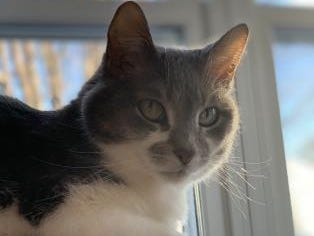 Sarah, 13, currently is in a foster home and is hoping to find a loving family. She is spayed.