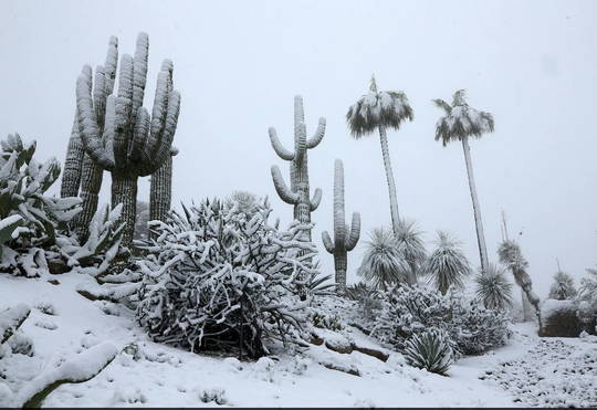 Nevada en Flagstaff, AZ