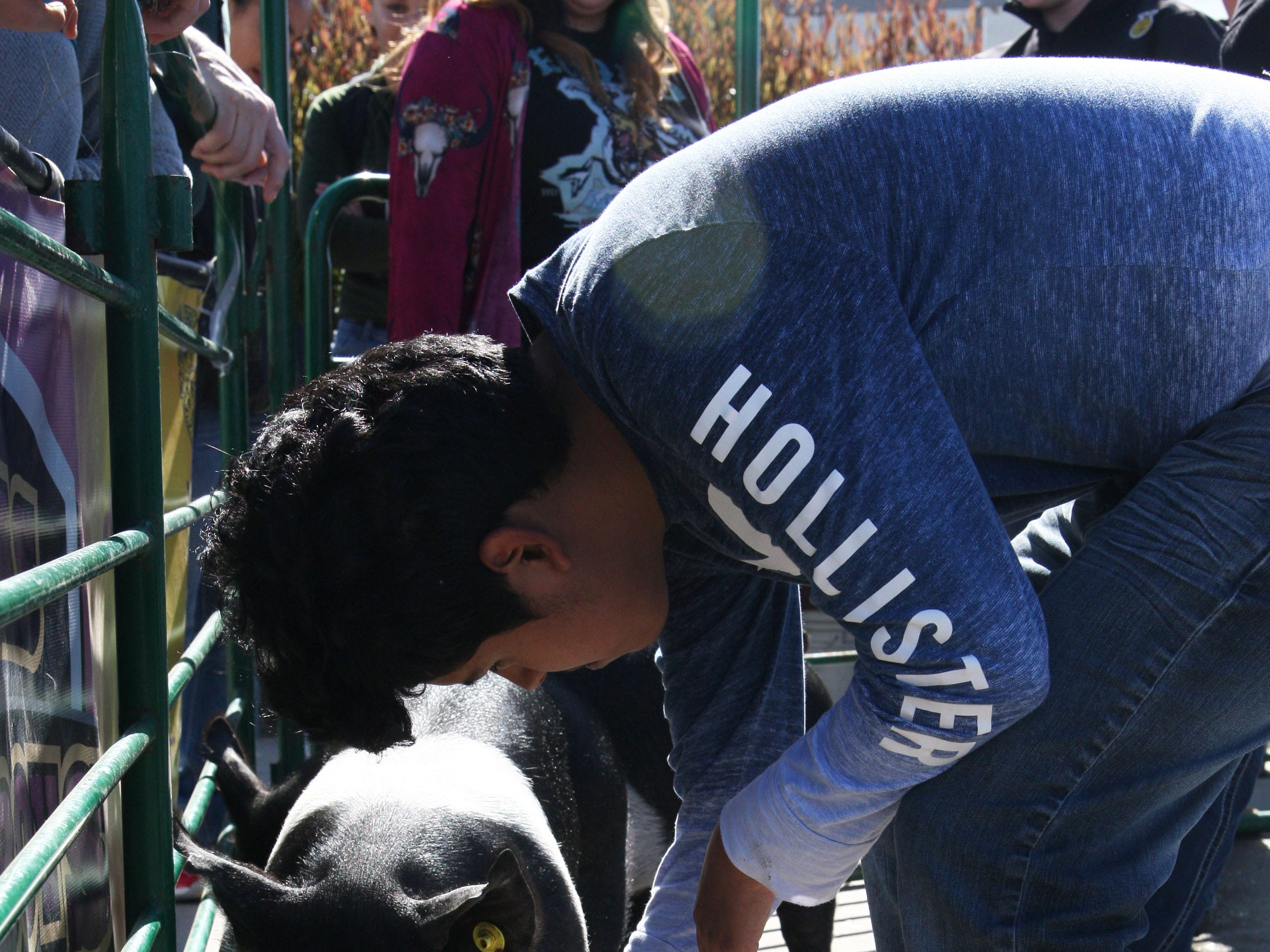 A student attempts to feed a pig.