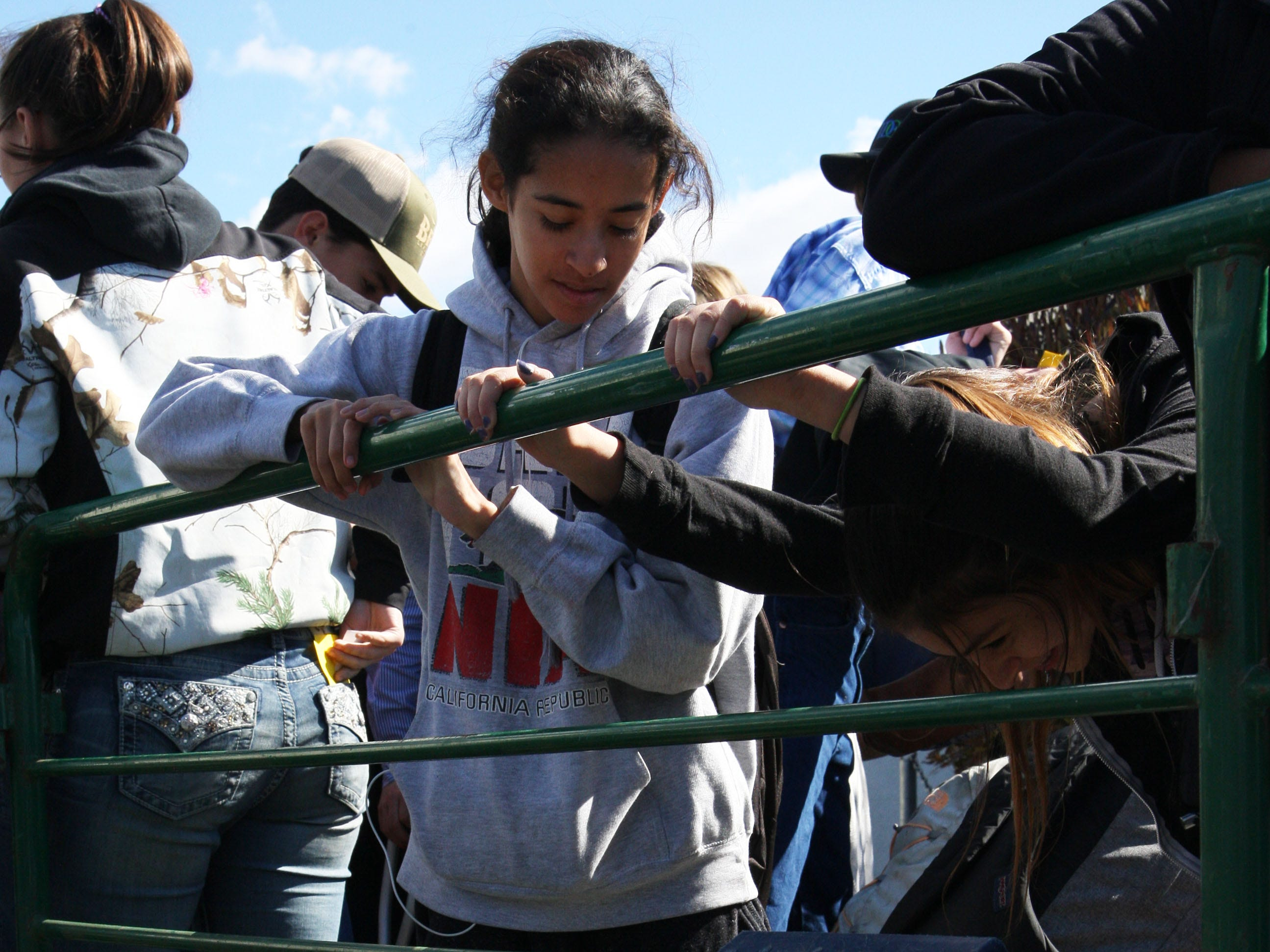Students look on as one of the pigs drinks water from a bucket.