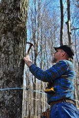 Doug Puffenbarger tapping a maple tree.