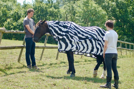 Joren Bruggink of Aeres University of Applied Sciences, at left, and Jai Lake of the University of Bristol investigate how horse flies behave around horses wearing different colored coats. This was part of an experiment with the University of California.