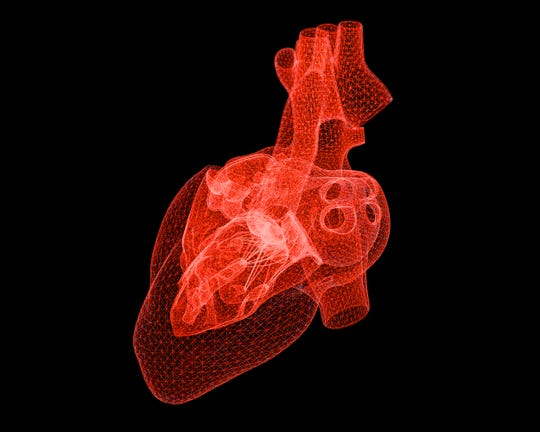 How the heart works: The heart is a pump in your chest. It is divided into four chambers, and each chamber has a valve. There are four valves that allow the blood to move in one direction through your heart.