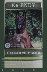 A photo of U.S. Customs and Border Protection Border Patrol K9 Endy. Endy retired and was adopted by his partner Brian Buchanan. A Twitter account dedicated to the return of Endy was created.