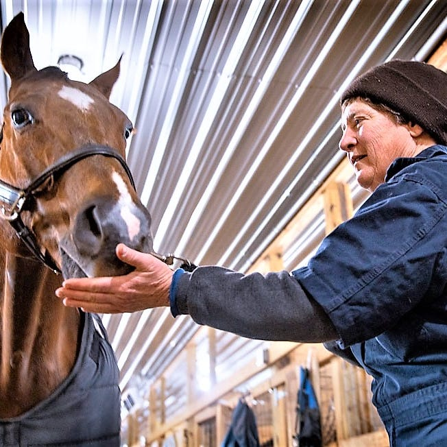 Horseheads veterinarian honored by Cornell University