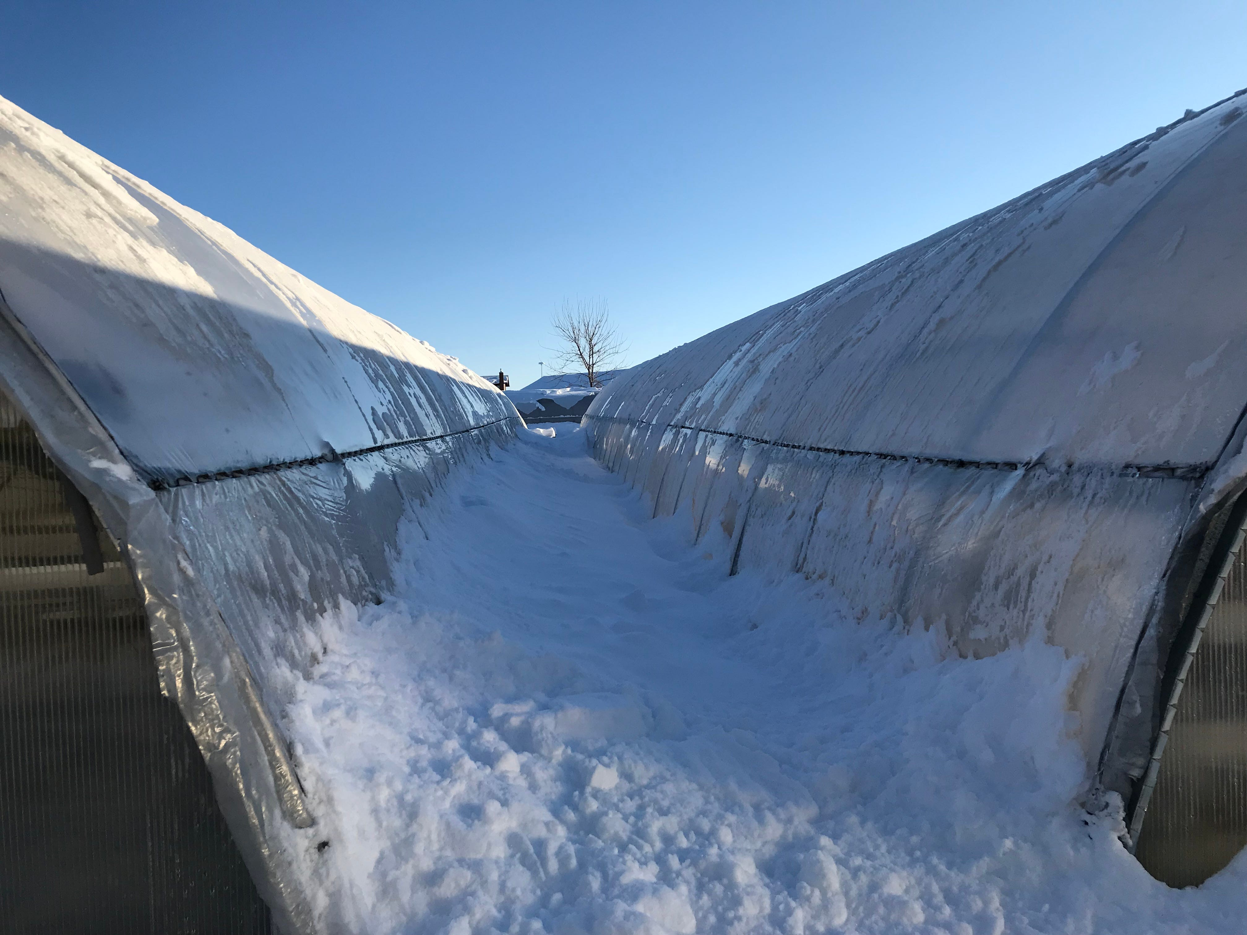 Snow piles up between two greenhouses at Bundi Gardens after sliding off the roofs. Snow did not slide off a greenhouse that collapsed sometime Wednesday evening or Thursday morning.