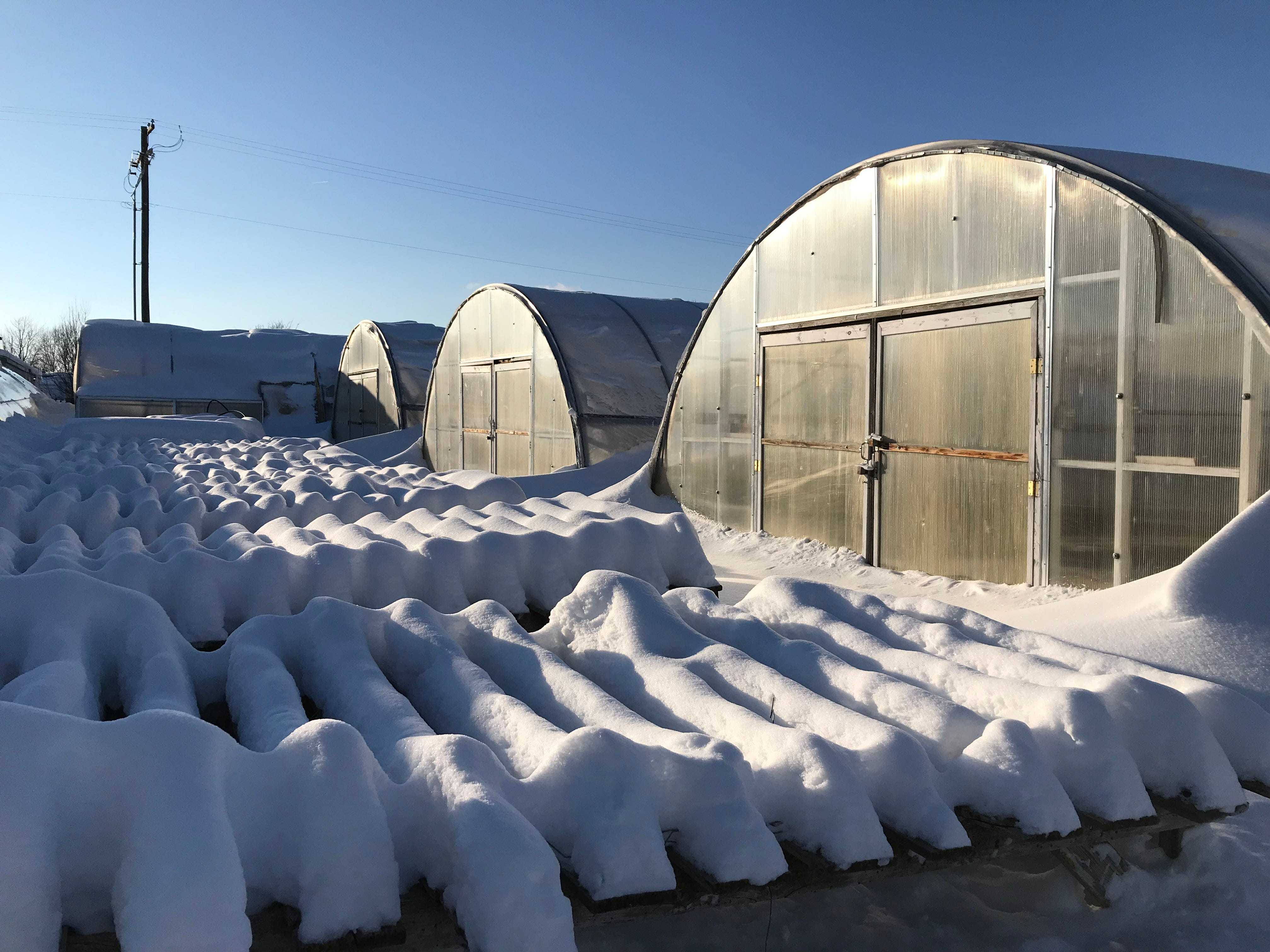 Bundi Gardens in Great falls has 11 greenhouses with four in use now. A greenhouse that is empty right now collapsed under the weight of snow.