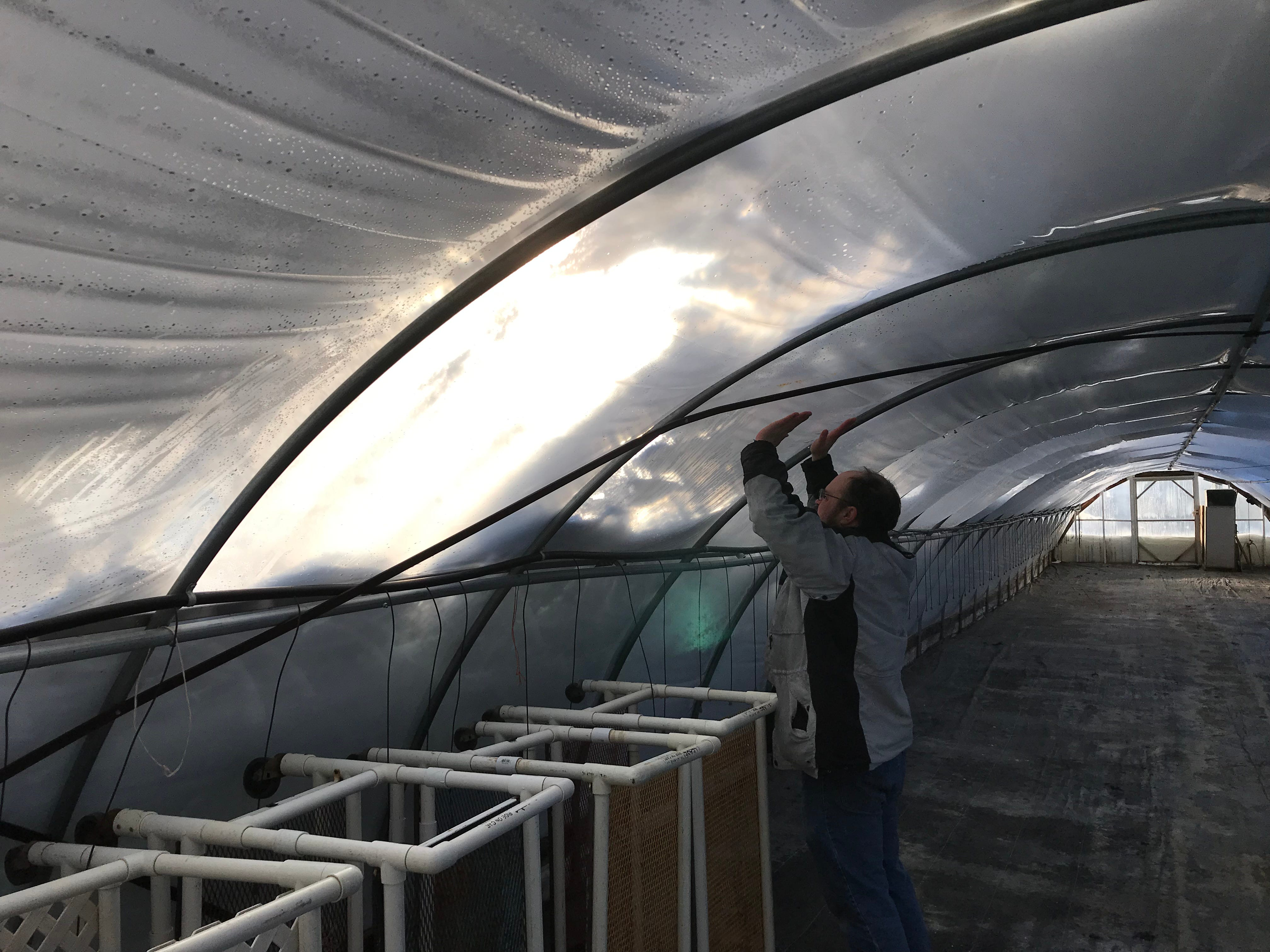 Ian Bundi bangs the roof of a greenhouse at Bundi Gardens to prevent another greenhouse collapse.