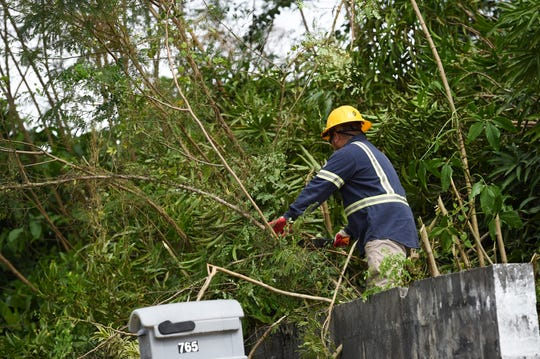 A Guam Power Authority employee chops down tree branches by the Route 4 highway in Chalan Pago during Guam's Typhoon Wutip tropical storm watch, Feb. 22, 2019.