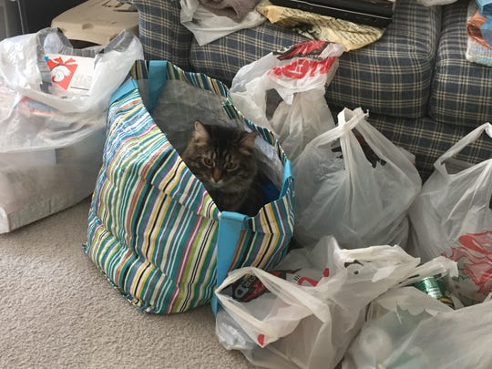 When I was getting together bags of recyclables recently, Katy decided she was a plastic bottle.