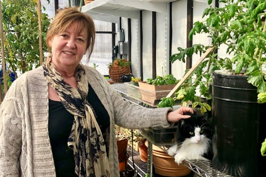 Elaine Williams and Felix the cat relax in their greenhouse among tomatoes and herbs grown year-round.