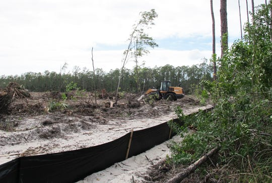 The nearly 17 acres of forested land being cleared on the southwest corner of Davis Boulevard and Market Street will be Vincent's Acres, a future Habitat for Humanity of Collier County neighborhood.