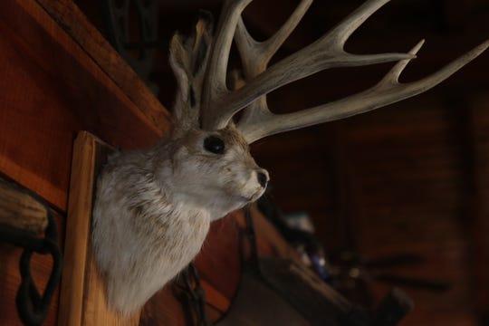 A jackalope mounted on the wall, Feb. 23 at Red Chimney Bar-B-Q.