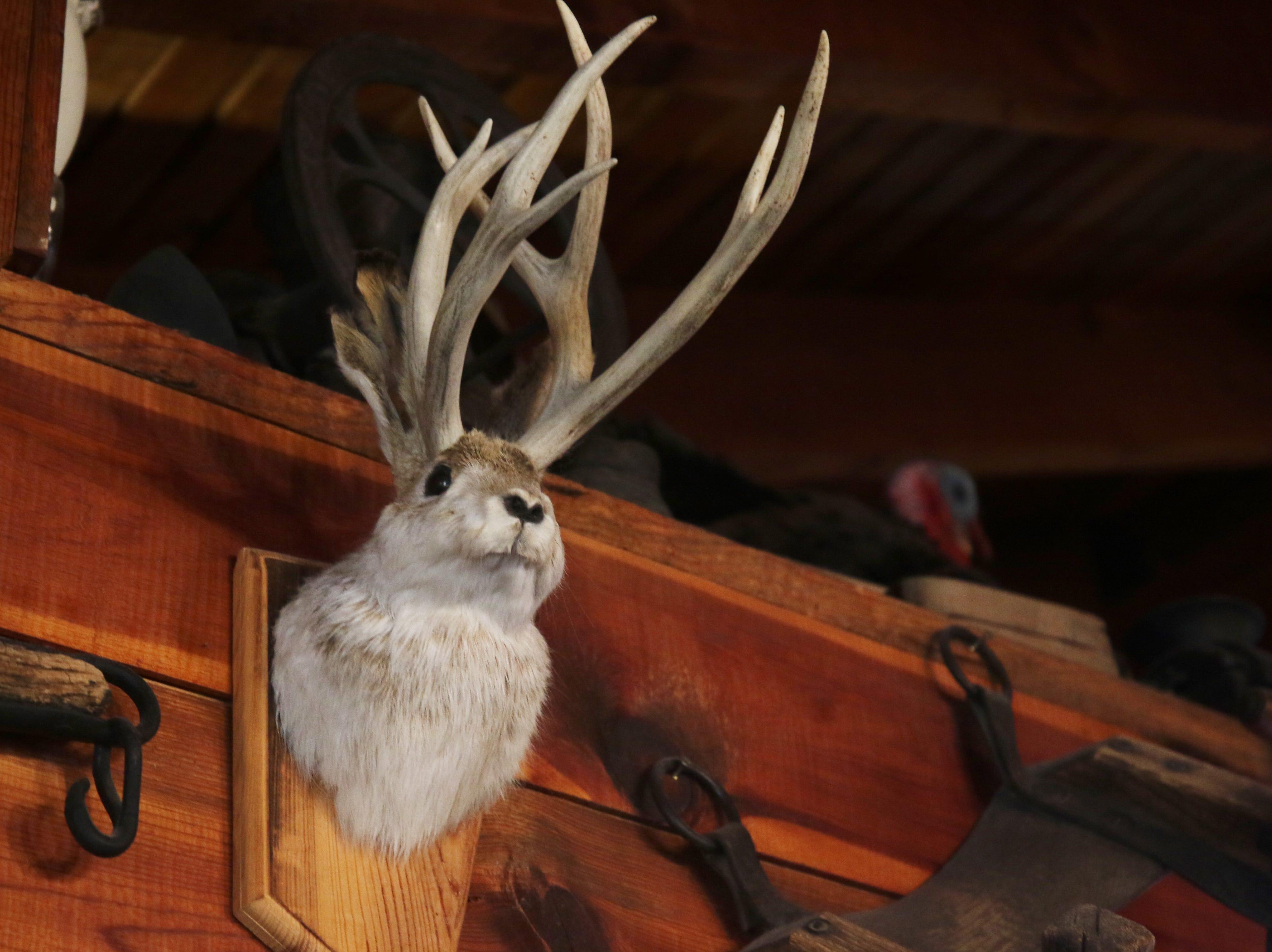 A jackalope bust adorns the wall, Feb. 23 at Red Chimney Bar-B-Q.