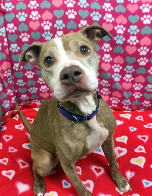Rayna is a diabetic dog at the Oshkosh Area Humane Society. A campaign was set up to help cover her food and insulin costs.