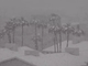 Snow builds on palm trees in Tucson on Feb. 22, 2019.