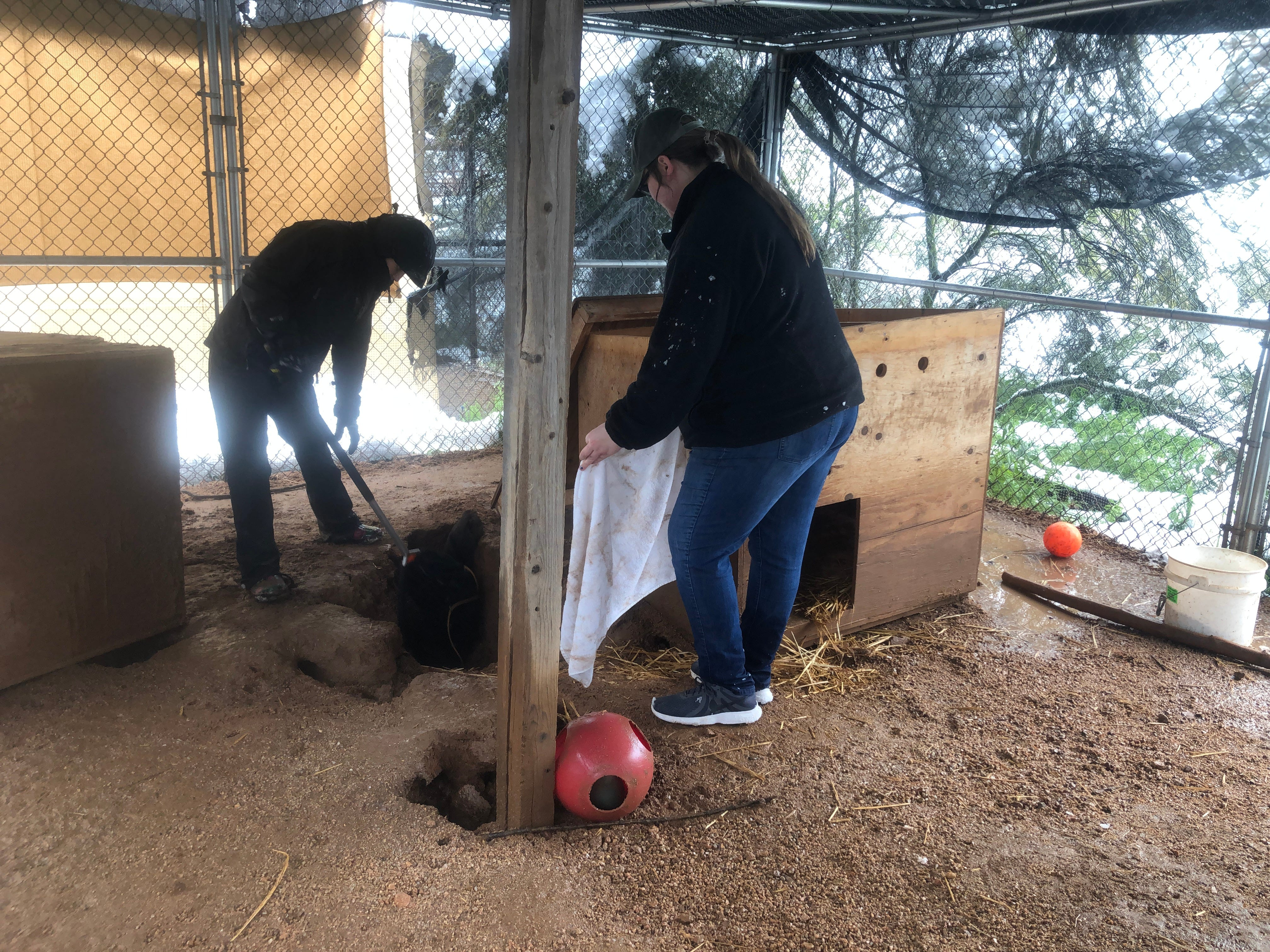 Staffers clean up cages affected by snow Southwest Wildlife Conservation Center