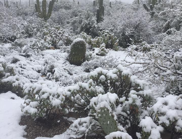 Trissina Kear and her husband found a snow-blanketed Sabino Canyon in Tucson, Ariz., during a winter storm on Feb. 22, 2019.
