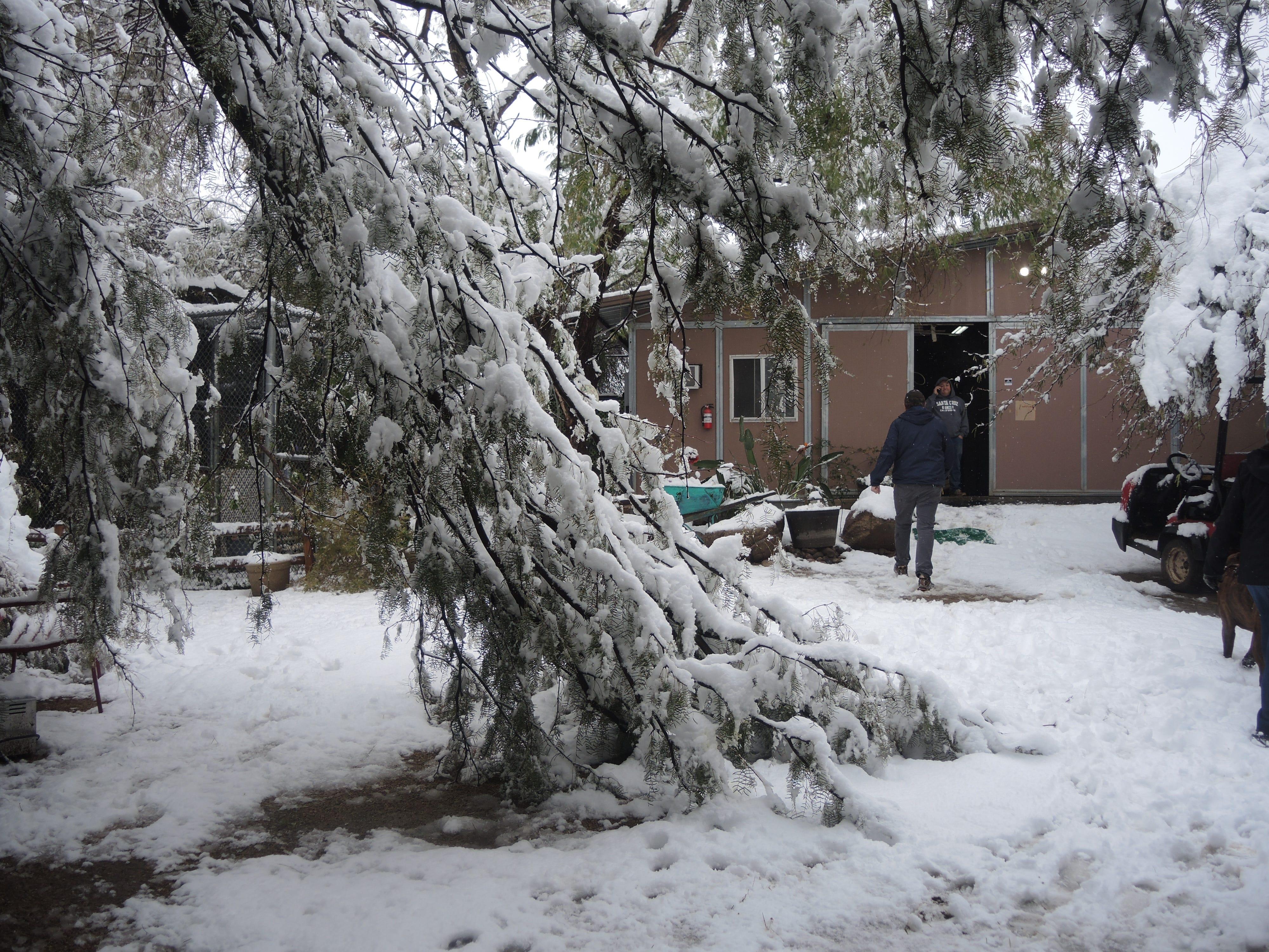 Fallen trees at Southwest Wildlife Conservation Center