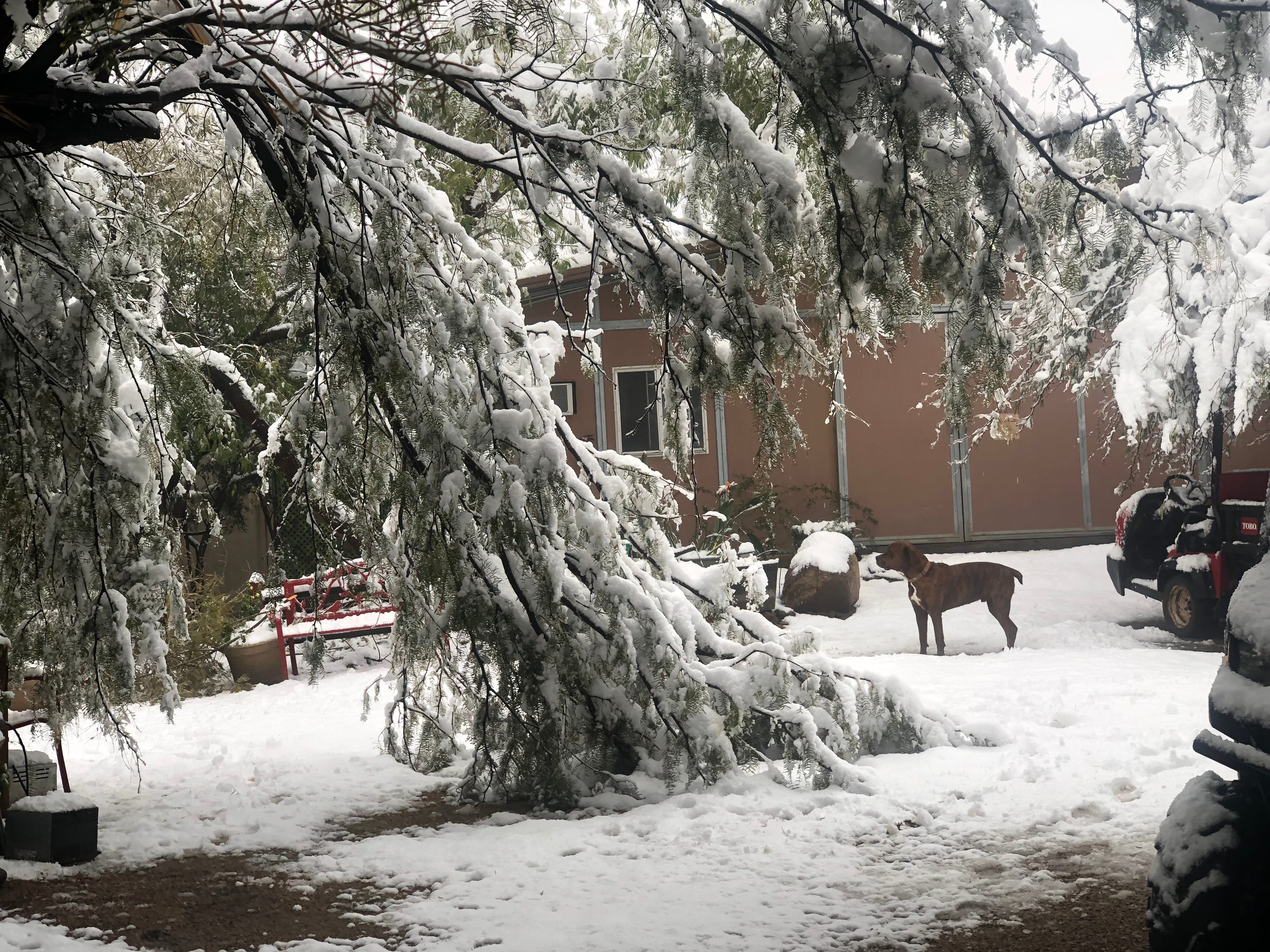 Tree branches fall down at Southwest Wildlife Conservation Center
