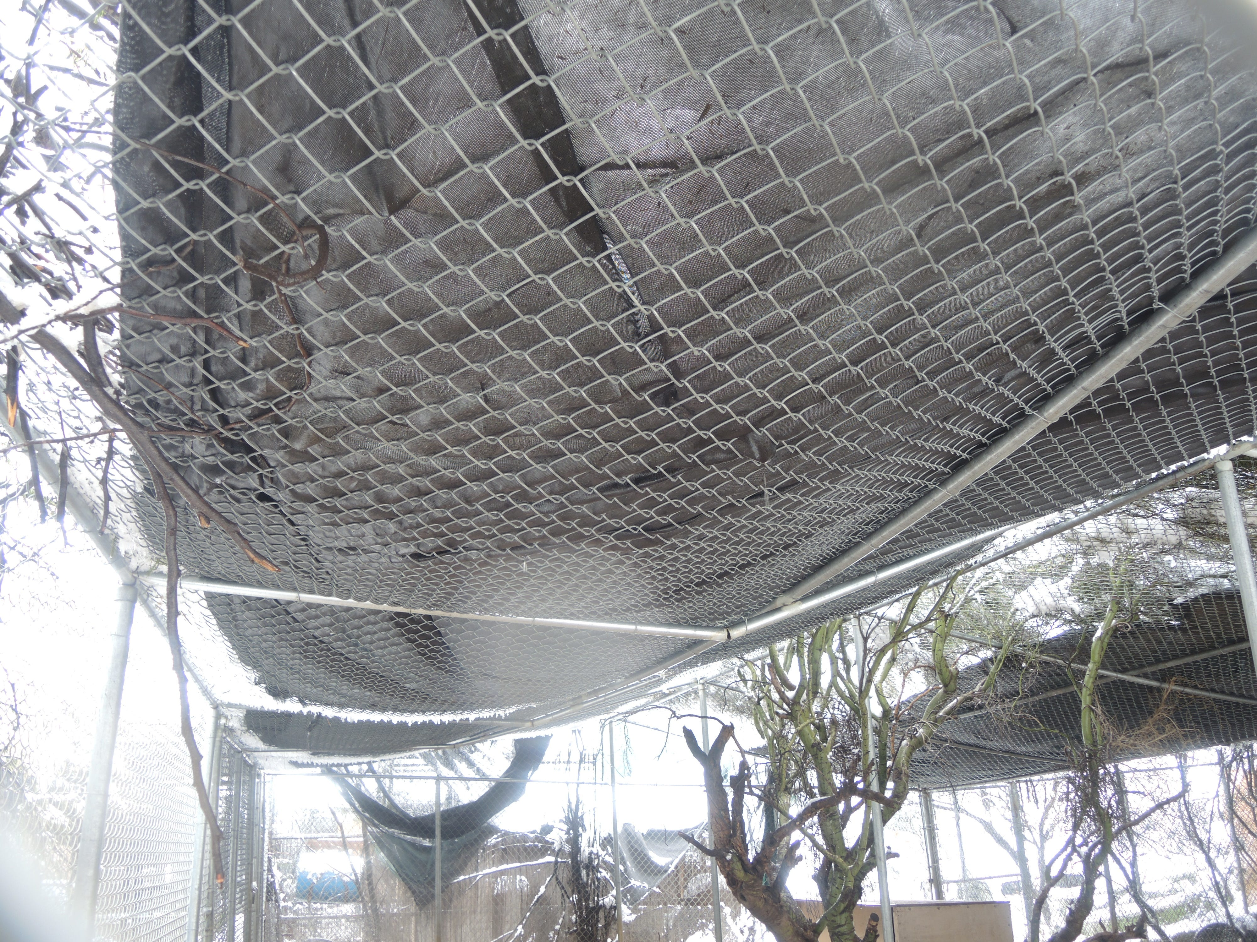 Collapsed roof at Southwest Wildlife Conservation Center